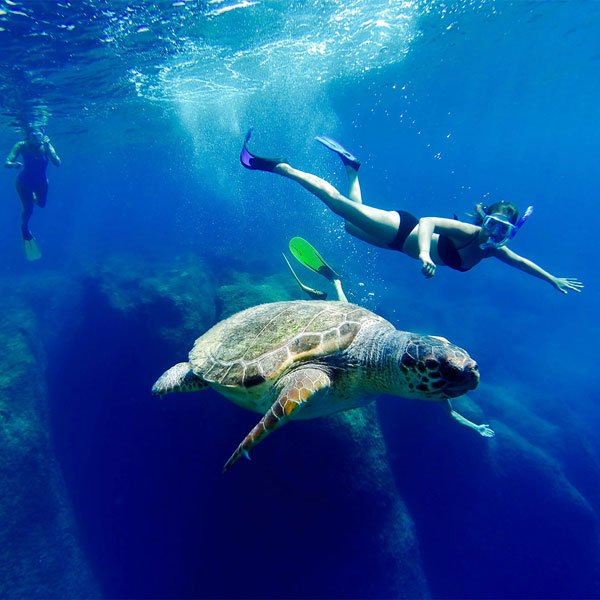 Swimming_with_turtle