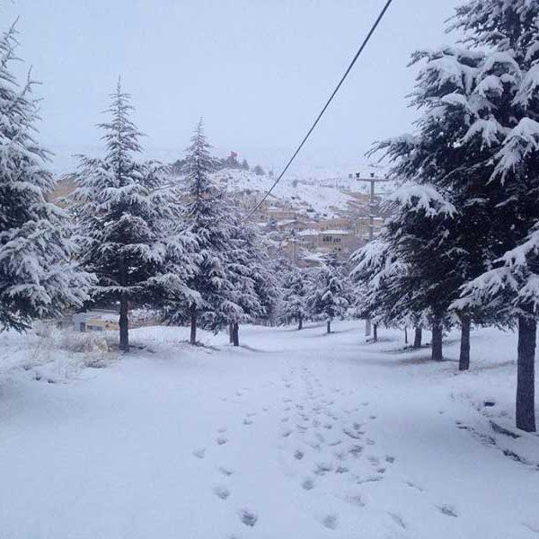 cappadocia snow mustafapasa trees